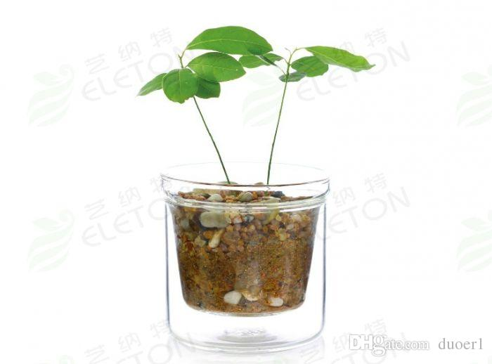 Online Cheap High Borosilicate Glass Flower Pot Transparent Glass Fancy  Green Plant Pot Double Layer Water Mini Flower Pot With Filter Hand Made  Vase By ...