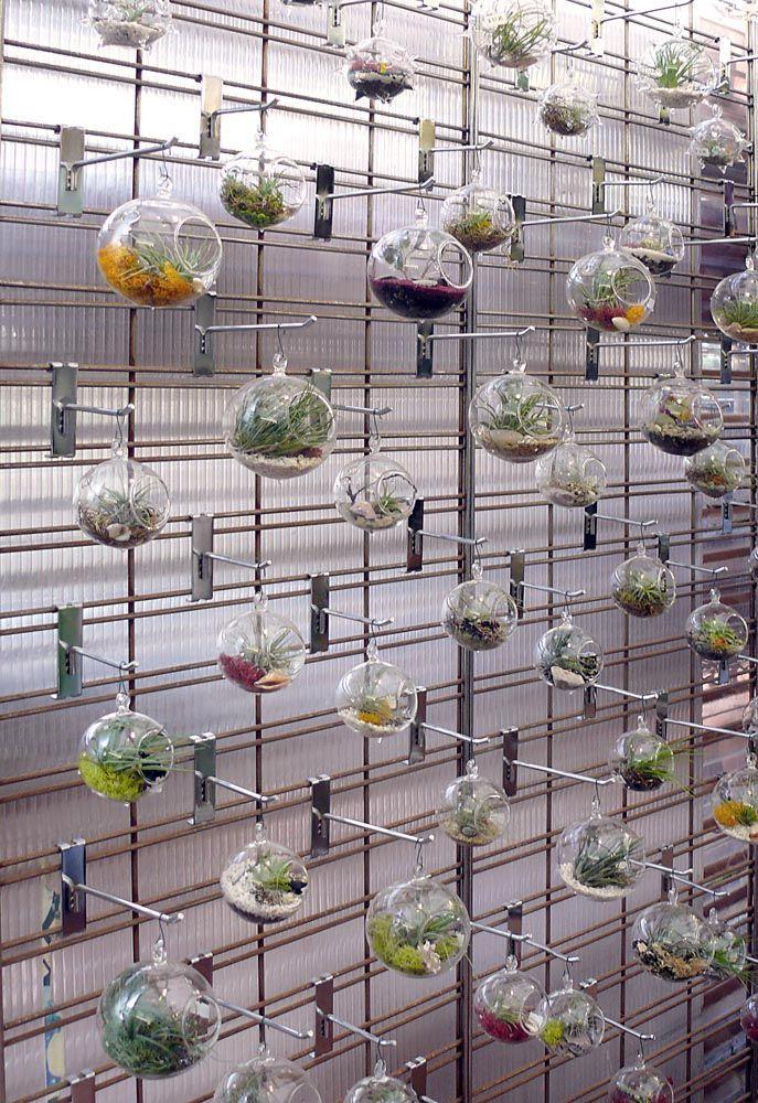 2017 Air Plants Round Terrarium Moss Succulent Planters