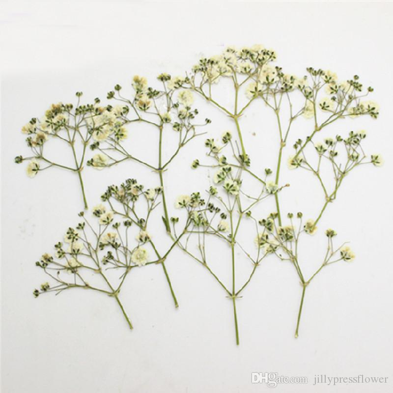 Newest Gypsophila Press Flower, Baby's Breath Dried Pressed Gifts Candle 10bags/For Garden Decorative DIY Teaching Specimen