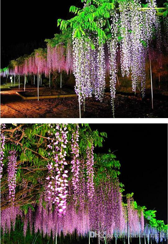 3 Packs, 4 seeds / pack, Blue Chinese Wisteria Vine, Wisteria sinensis, Seeds Fast, Showy#A241