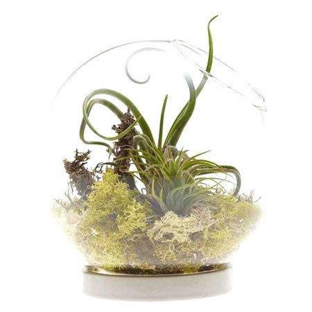 Glass moss orb terrarium,air plants indoor garden terrarium vase,succulent planter globe terrarium for home bottle