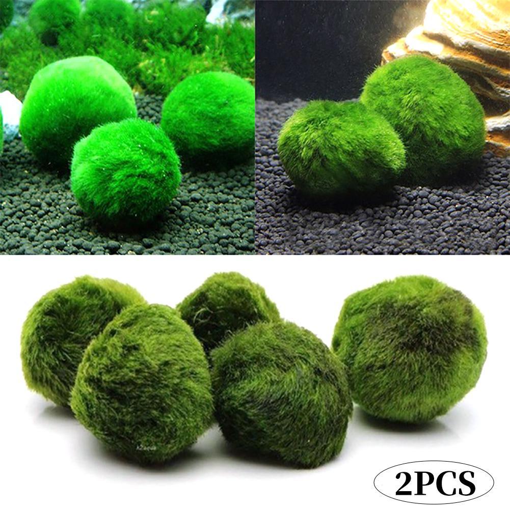 2Pcs 3-4Cm Marimo Moss Balls Live Aquarium Plant Algae Fish Shrimp Tank  Ornament Dark Green