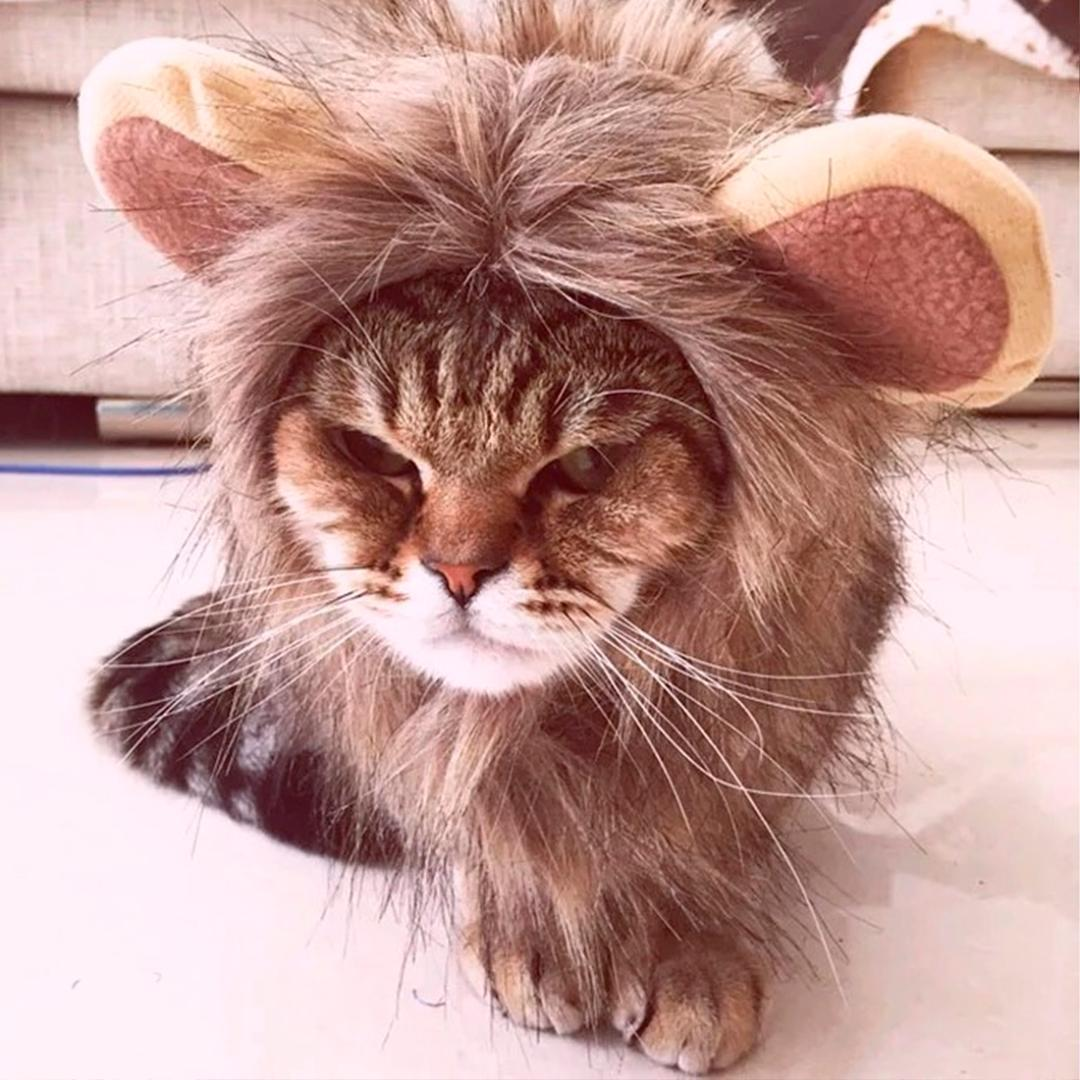 4171a6207 S/M/L Funny Small Pet Dog Cat Cosplay Lion Wig Head Cap Hat Costume Cosplay  Lion Mane Wig Cap Fancy Dress Up With Ears Halloween Cat Costumes Pet  Halloween ...