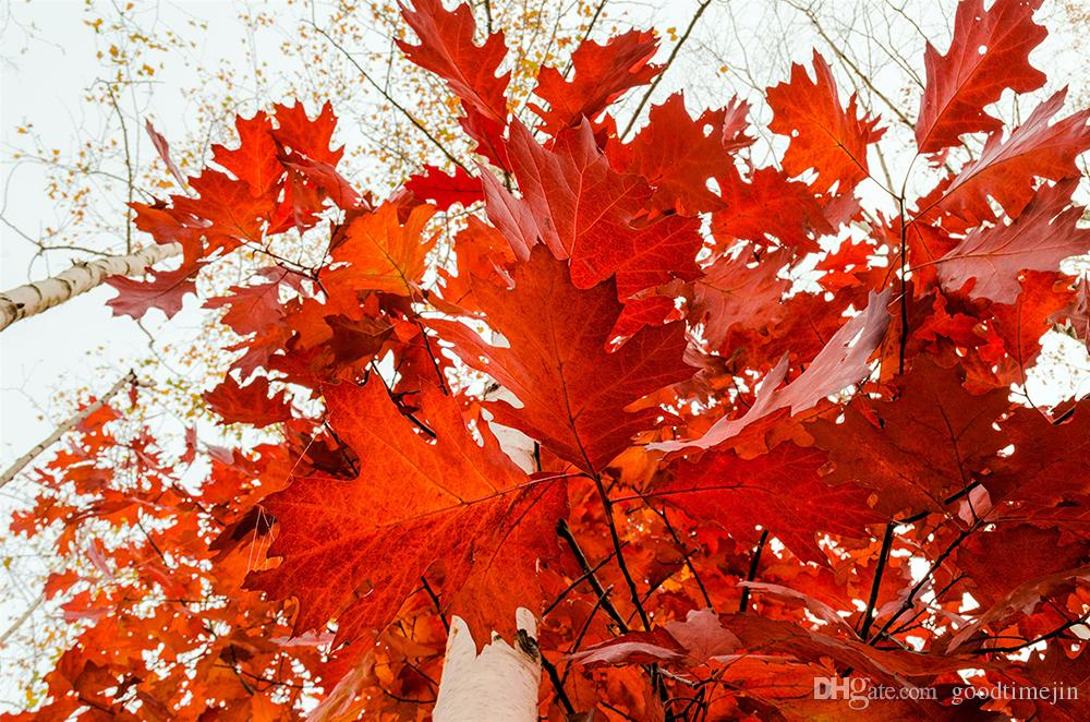 5D DIY Landscape Red Maple Leaves Full of Diamond Painting Cross Stitch Kits Over drilling Home Decoration