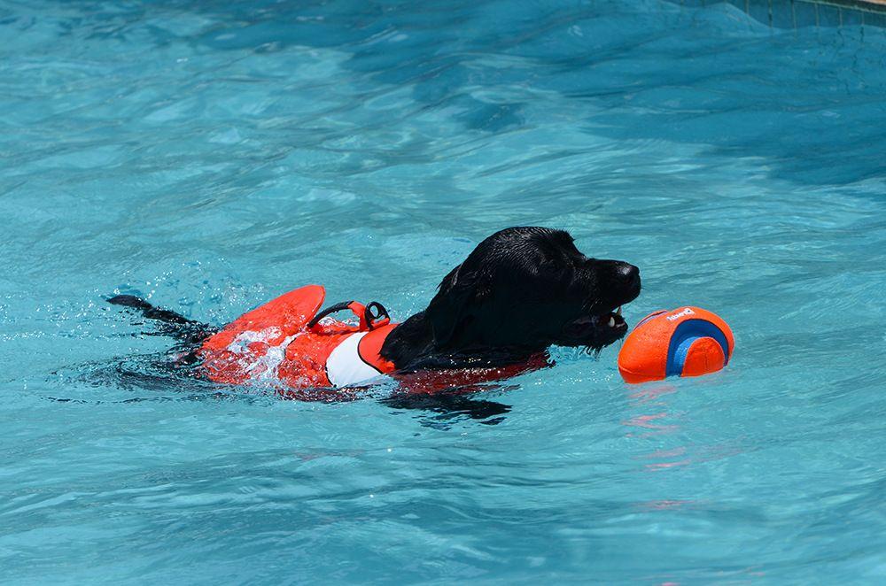 Dog Life Jacket Swim Vest Life Jacket Life Jackets For Dogs Golden
