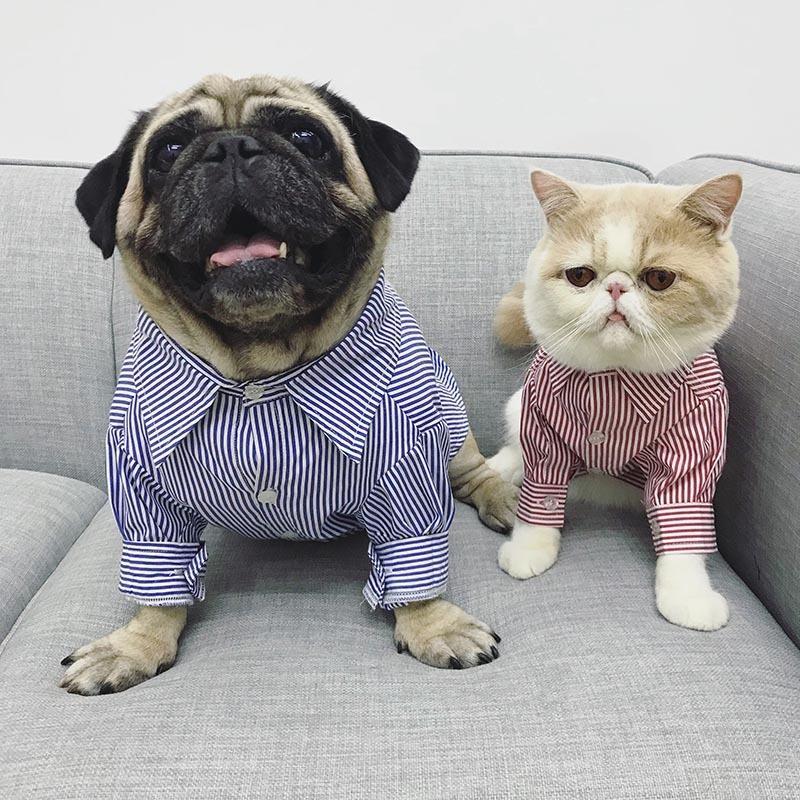 Compre Clássico Pet Dog Shirt Alta Qualidade Dog Clothes Para Pequenos Cães  Animais De Estimação Roupas Listrado Pug Roupas Pet Filhote De Cachorro  Outfit ... 77060e11074ad