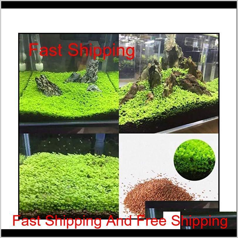 wholesale garden fish tank aquarium plant seeds aquatic water grass ornamental plant home yard decoration qylwmd