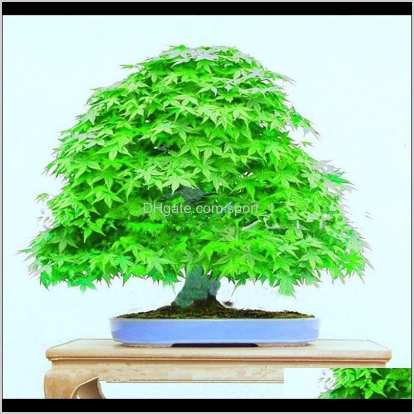 100% genuine 30 pcs / bag seeds multicolor maple bonsai tree plant flower japanese mini maple tree planta for courtyard home garden