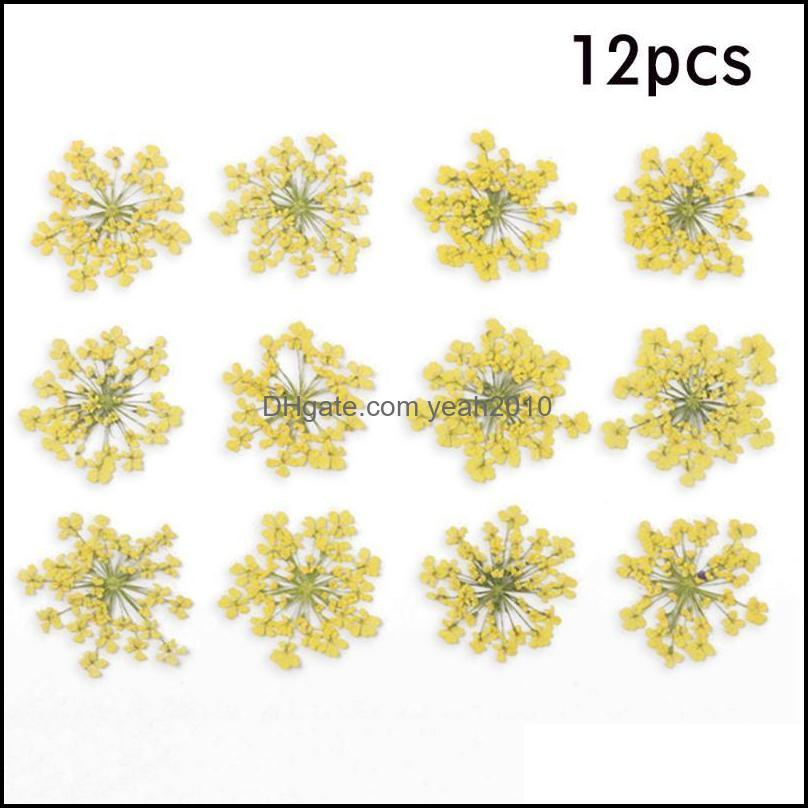 12Pcs/Lot Pressed Dried Ammi Majus Flower Dry Plants For Epoxy Resin Pendant Necklace Jewelry Making Craft DIY Decor Accessories1
