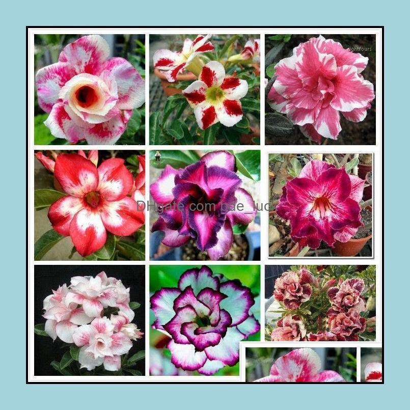 10pcs Adenium obesum Desert Rose Flower (Not Artificial flowers, dried flowers)1