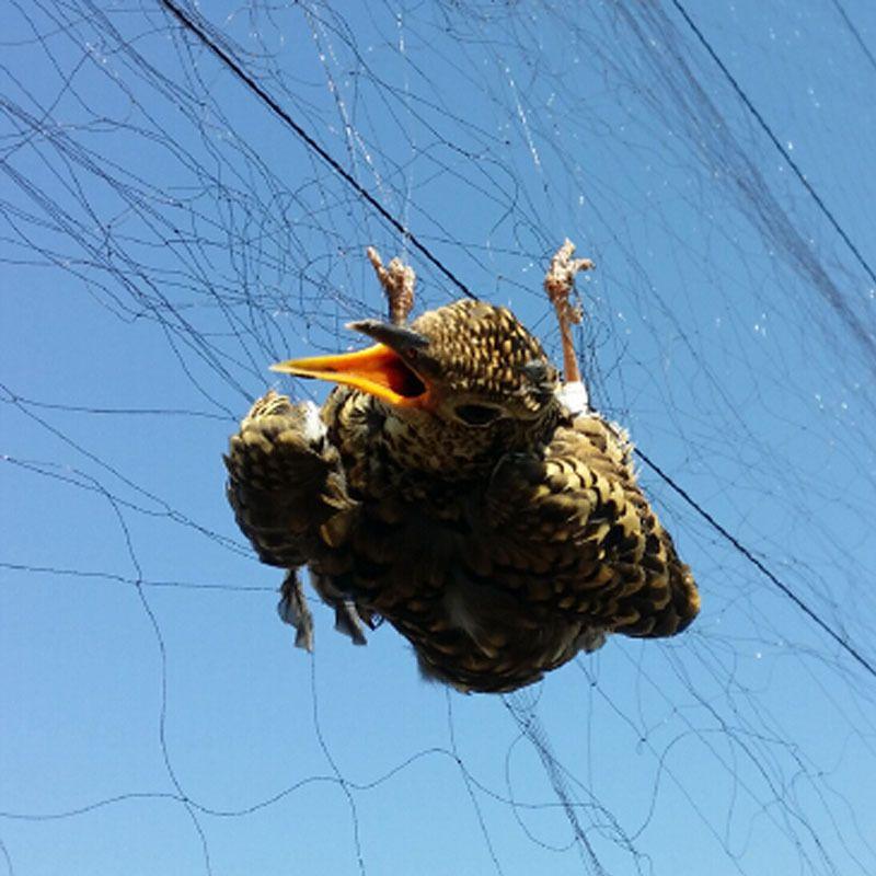 2019 Wholesale Gauge 25m X 3m 18mmsquare Bird Nets For