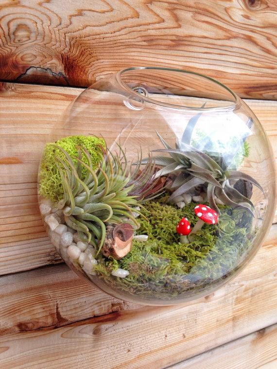 2019 Air Plant Bubble Terrarium Indoor Wall Planter Wall