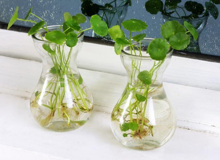 New Glass Flower Vase Clear Vase Flower Bottle Home Decoration Glass