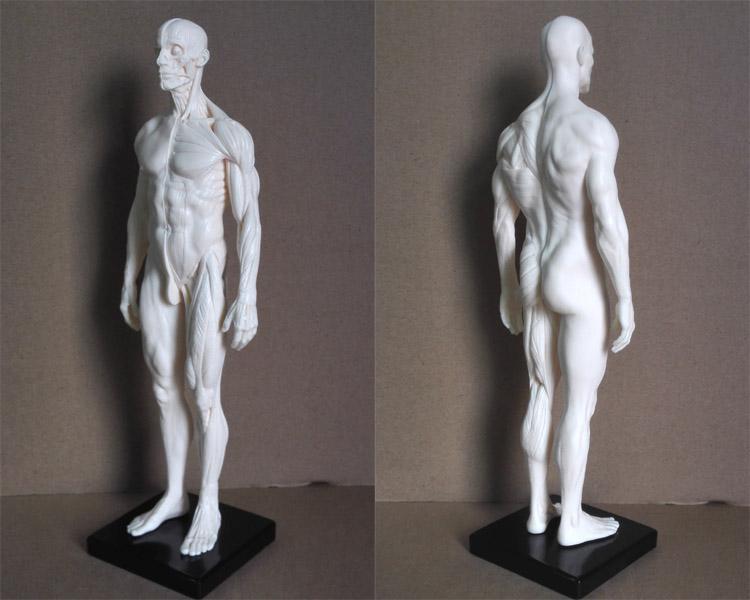 Großhandel 30cm Menschliches Männliches Skelett Pu Modell Anatomie ...