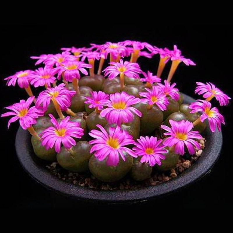 Best Purple Flower Raw Stone Flower Pot Seeds Living Room And Office ...