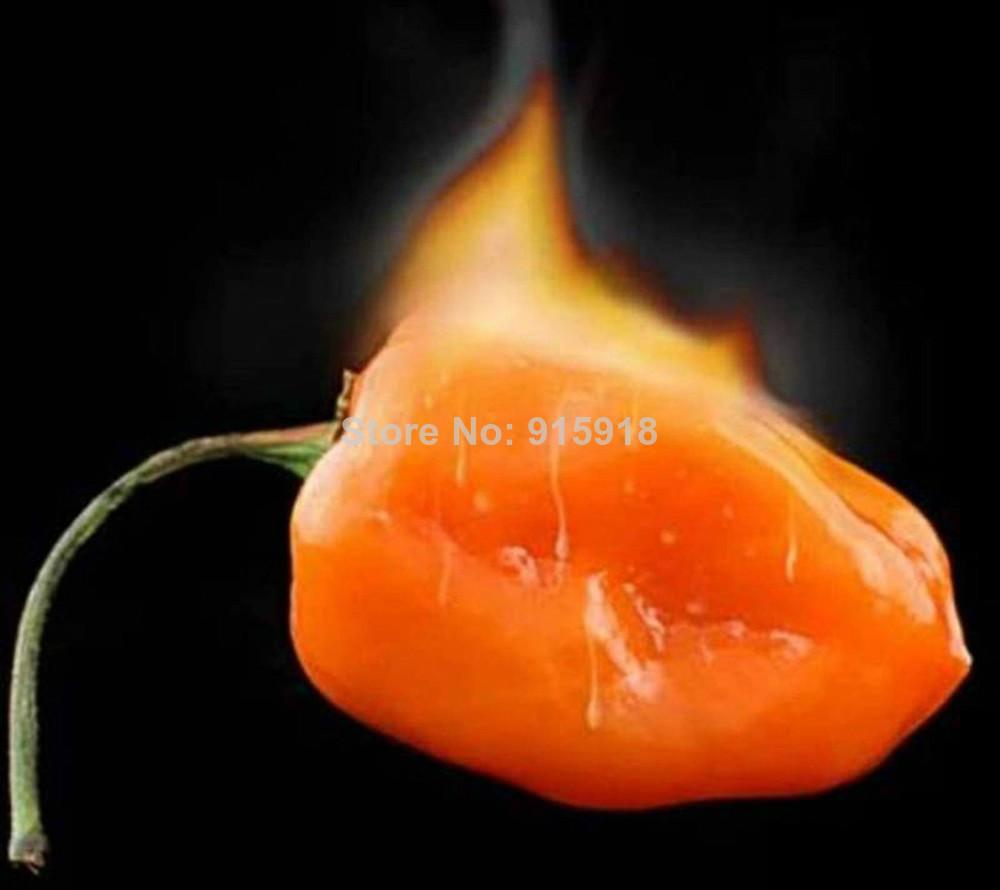 Semillas de hortalizas Habanero Orange Chilli Pepper Plant - 100 PC Semillas- ¡Muy caliente!