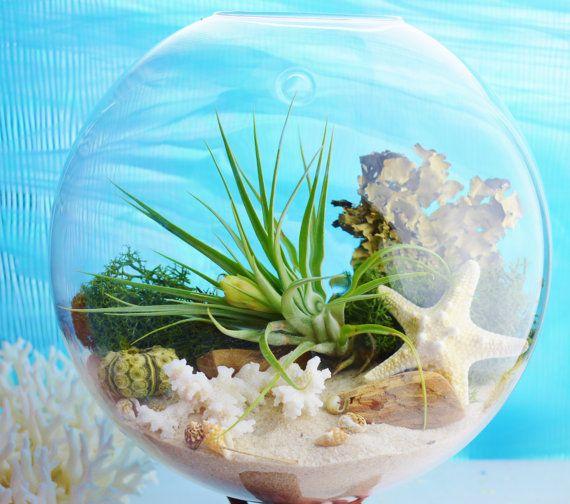 Piante Grasse In Vetro.Acquista Vaso In Vetro A Parete Vaso Terrari In Vetro A Parete