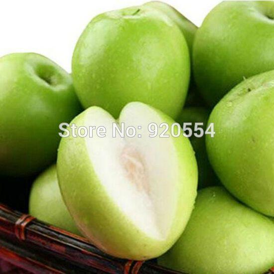 Hot selling 20pcs/lot Taiwan s big jujube ,sweet dates seed evergreen fruit  tree bonsai plant DIY home garden free shipping
