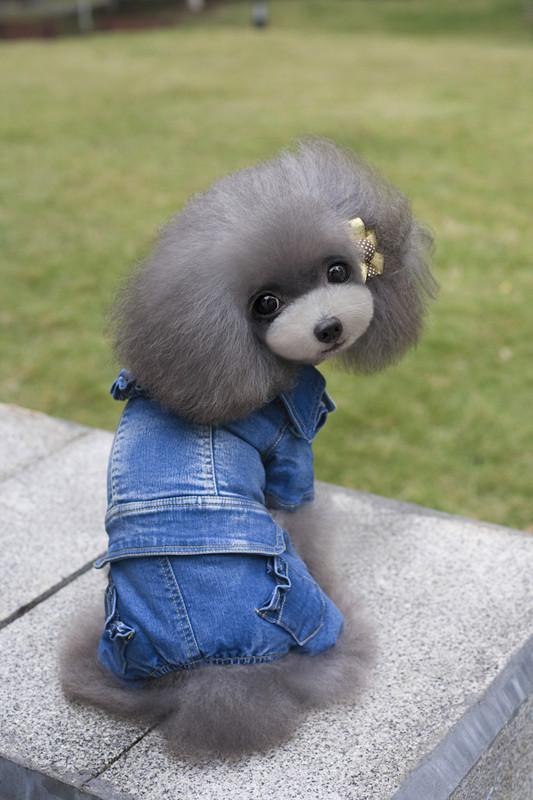 Fabrik Großhandel Hund Bekleidung Jeans jecket Mantel 4 Füße Famle Mädchen Hund 4 Fuß Kleidung Welpen Hund Oberbekleidung Himmelblau Farbe Thines Mantel