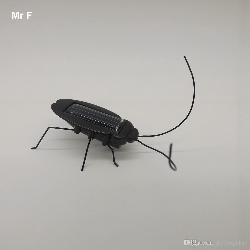 fate of a cockroach