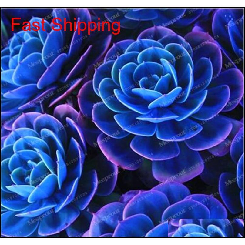 best-selling 100 pcs japanese succulents seeds rare indoor flower mini cactus seeds fleshier plant polygon flower seeds for sale