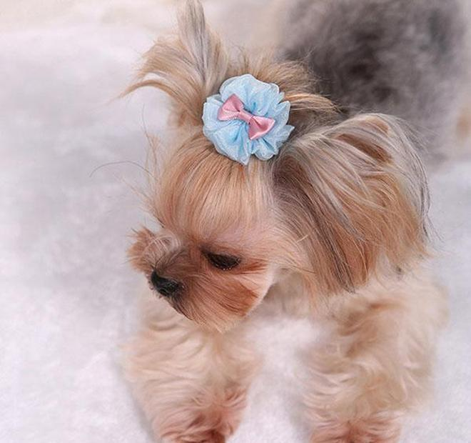 flower vision pet dog hairpin set teddy poodle dog clip set hair accessories hairpin pet wedding headdress pets hair accessories