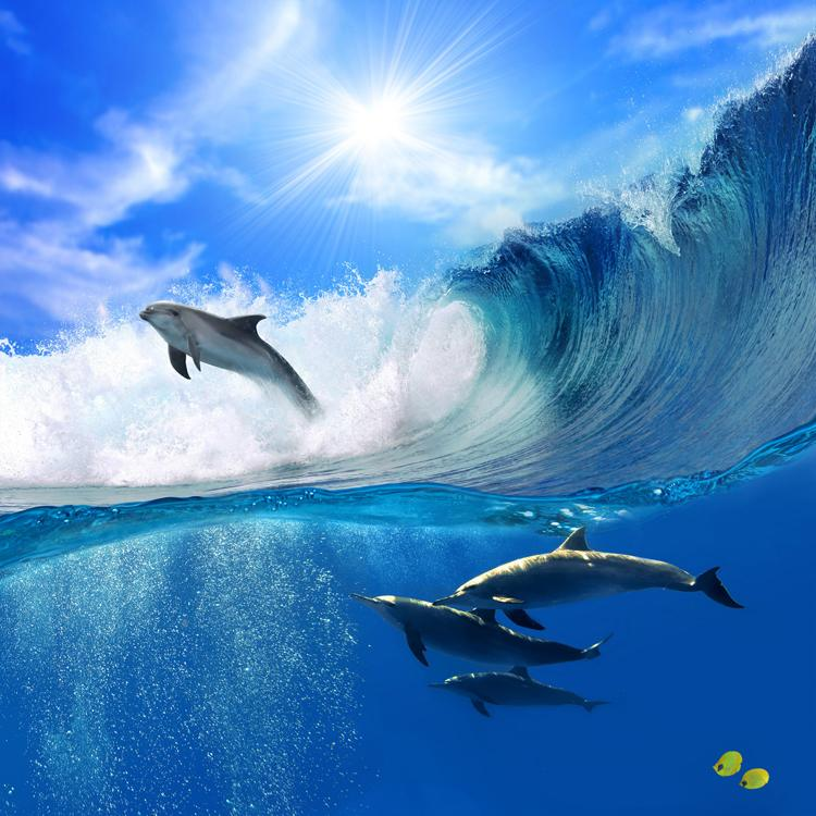 Ocean Dolphin Wallpaper Custom 3d Wall Murals Underwater World