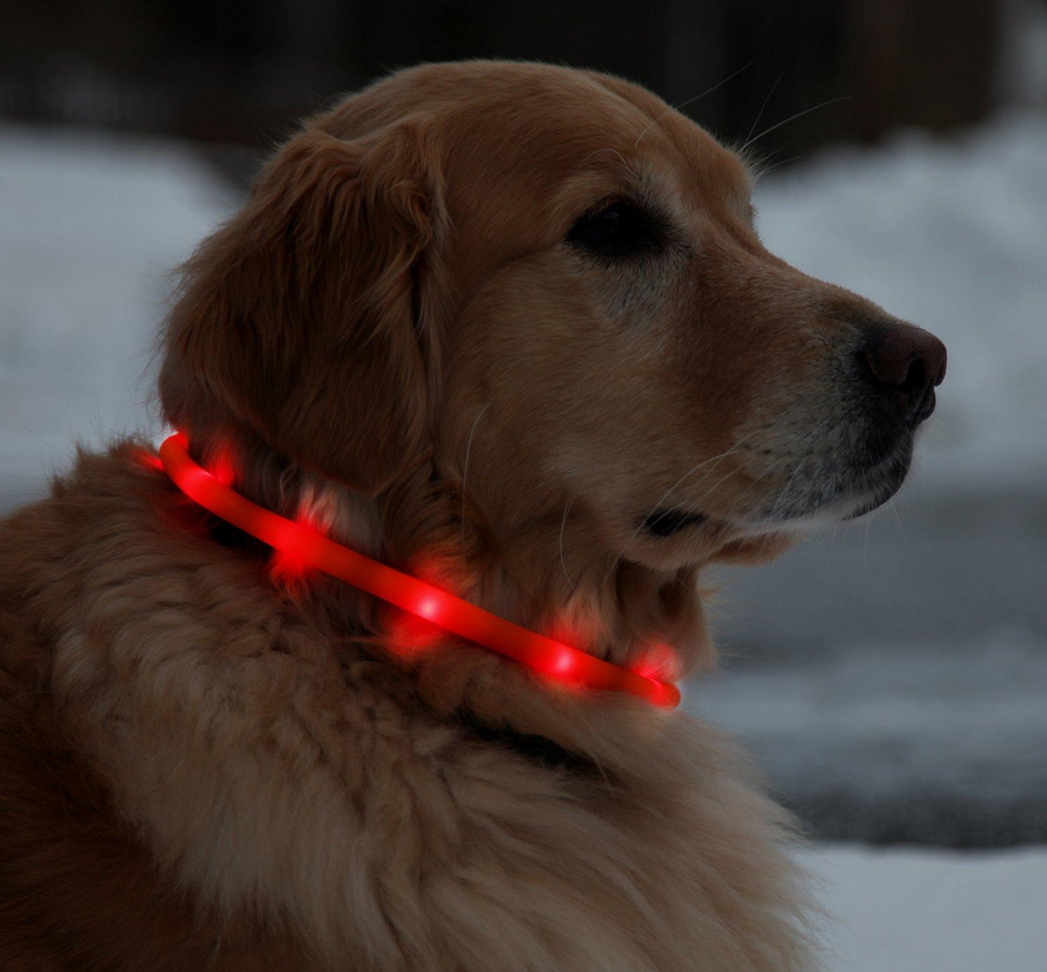 Collare per cani USB ricaricabile a LED Impermeabile Light-Up Night Neck Loop Fashing Tube Band Grow in the Dark