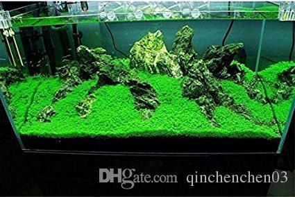 Aquarium Seeds Water Grass Live Plant Fish Tank Decoration Landscape  Ornament 2 oz/10pieces