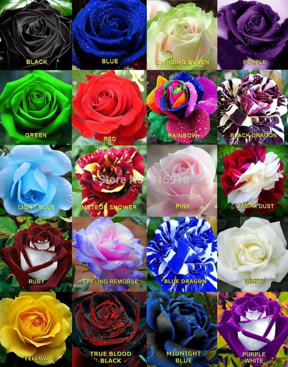 Flower Seeds Bonsai 50 X Rare Multi - Colors Rainbow Rose Seeds ...