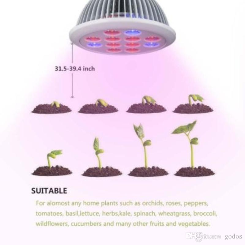 pole blue pipe lights red plant light plants lighting led meat fleshy lamp product growth photosynthesis clip and