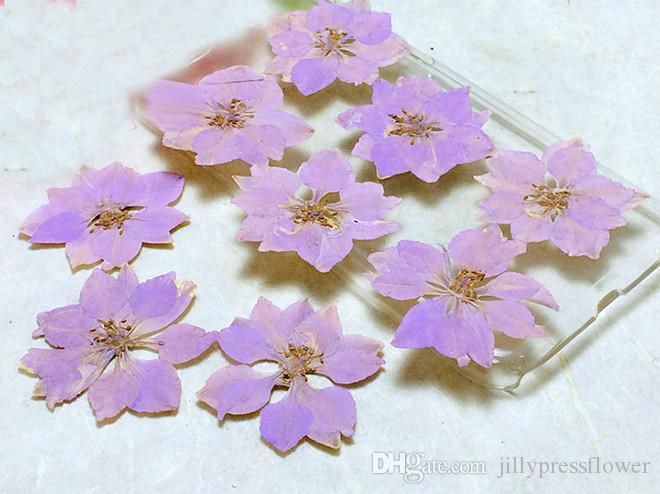 Factory Red / White / Purple Larkspur DIY Framed Pressed Flowers For Iphone Case floral Specimens Wholesale Free shipment 1 /