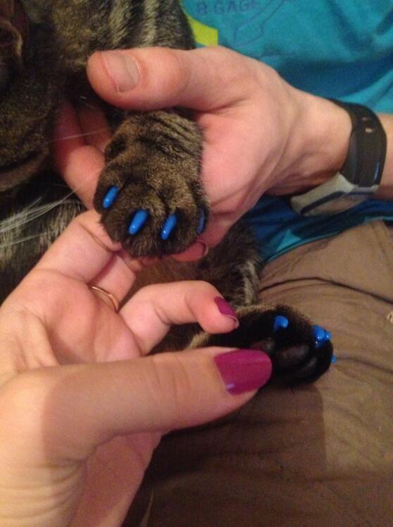Silikon-weiche Katze-Nagel-Kappen / Katzentatzen-Greifer / Haustier-Nagel-Schutz / Katze-Nagel-Abdeckung mit freiem Kleber und Applikator G1123