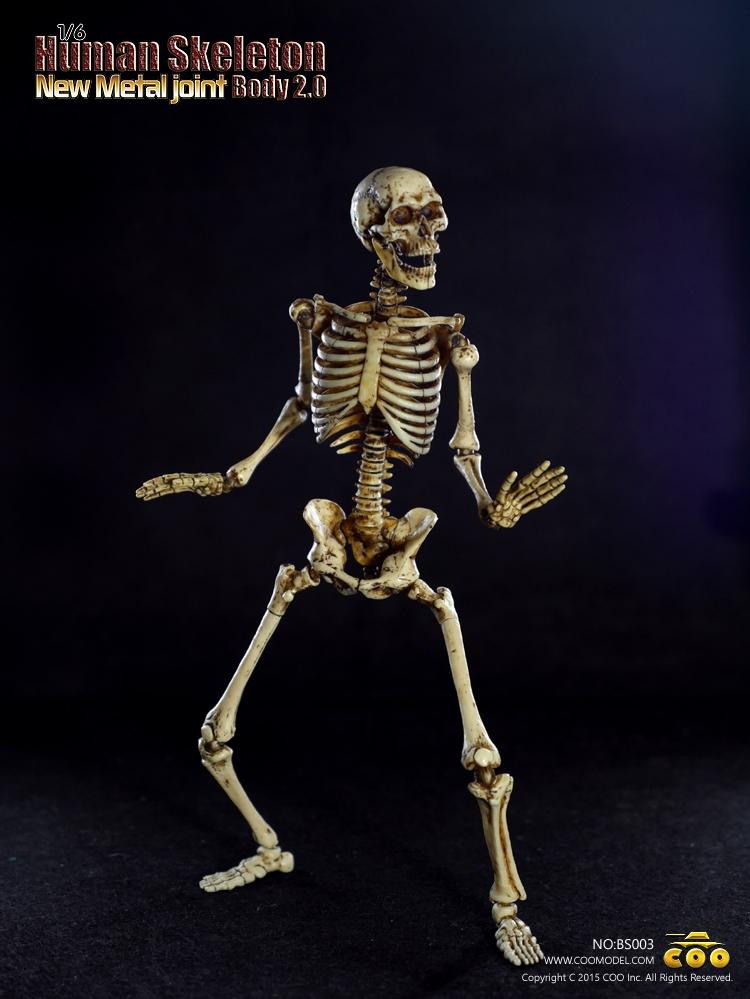 wholesale 1:6 coomodel toy coo movable human skeleton body 2.0 new, Skeleton
