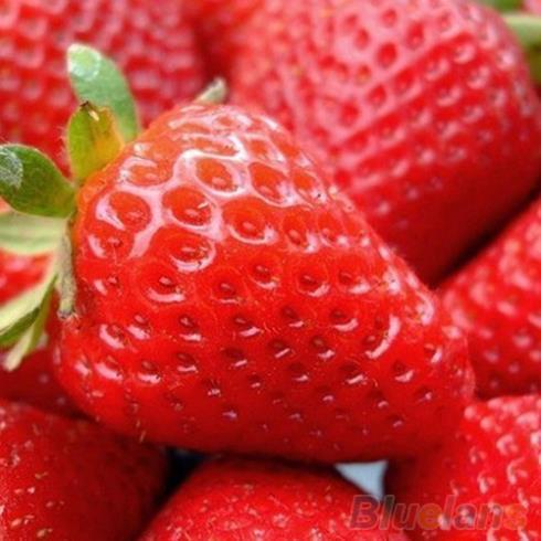 빨간 딸기 딸기 4 계절 과일 씨앗을 등반 F055