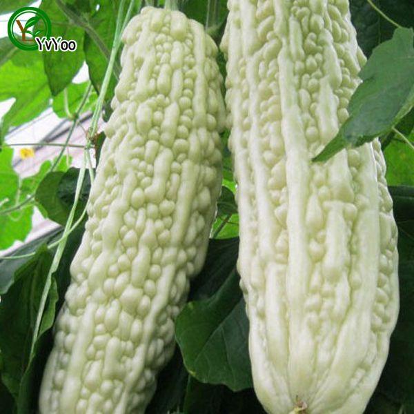 Белые горькие выбежки Семена зеленых органических овощей и фруктов вкусный 20 частиц / лот K020