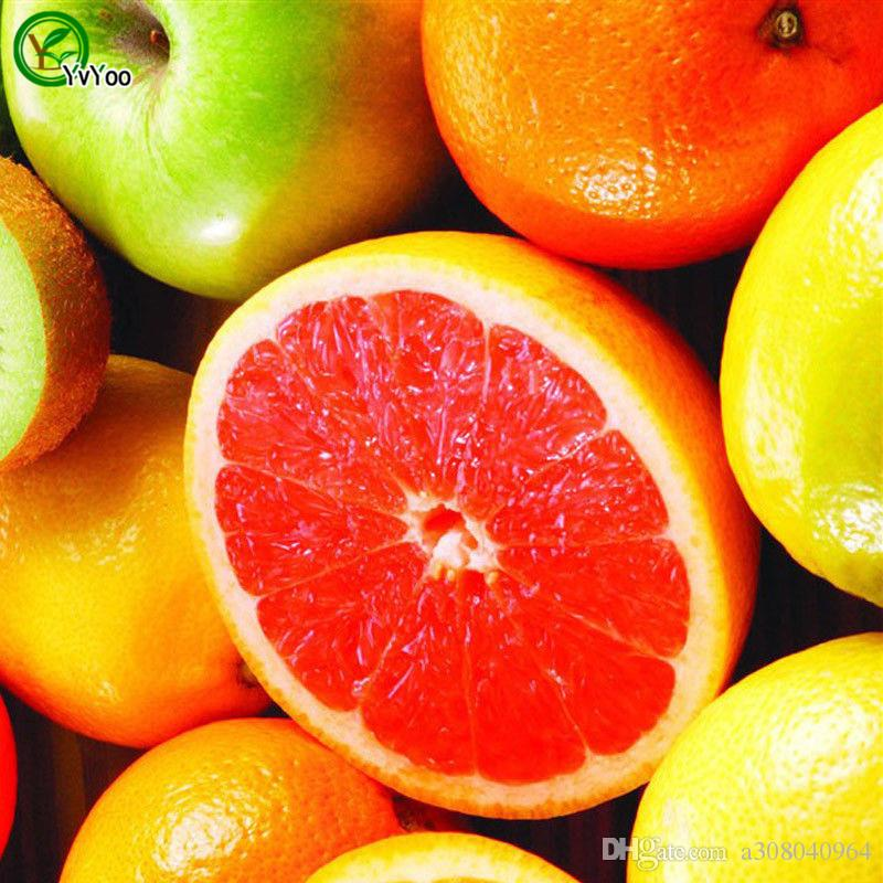 컬러 화 된 레몬 씨 정원 식물 분재 유기농 과일 및 야채 씨앗 30 개 x007