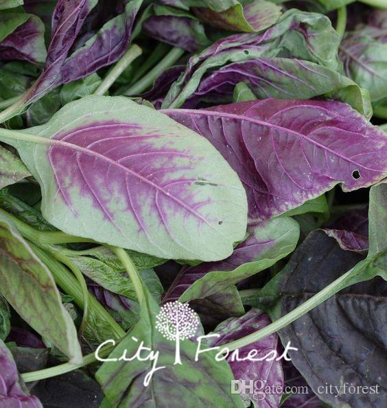 Red Leaf Amaranth Vegetable Seeds / Bag più facile da coltivare più dolce, sapore più leggero Garden Vegetable