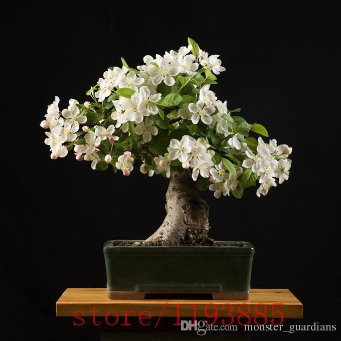 2018 Gardenia Seeds Cape Jasmine ,Bonsai Flower Seeds, Smell U0026 Beautiful  Flowers Potted Plants For Home U0026 Garden From Monster_guardians, $19.6 |  Dhgate.Com