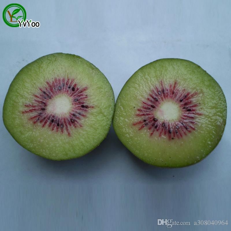 Kiwi Seeds garden plants Bonsai organic fruit and vegetable seeds g009