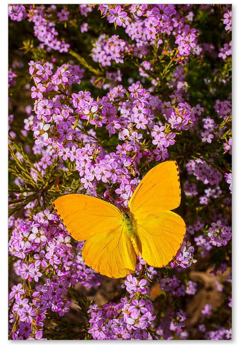 Blumen-Schönheits-Ölgemälde auf Segeltuch die grüne Pflanzen-Stillleben-Art-preiswerter Preis für Haus-Dekoration für perfektes anwesendes exotisches YMPK306