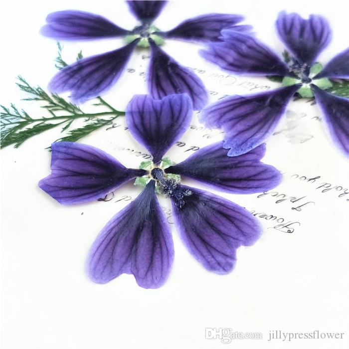 Dark Purple Dried Hollyhock Flowers , Pressed Flower Artwork For Aroma Wax Tablets Wholesales