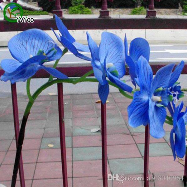 30 Parçacıklar / Güve orkide tohumları Çiçek Tohumları Ev Bahçe için Bonsai Saksı Bitkileri u013