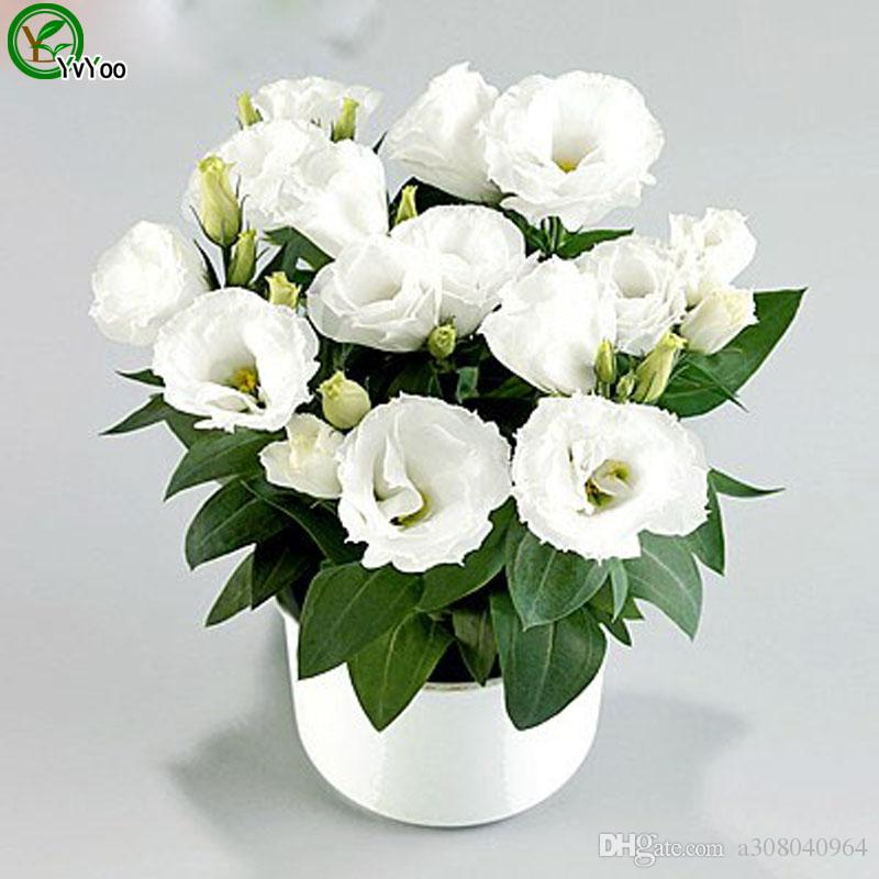 Multi color optional Lisianthus Seeds Flower Seeds Indoor Bonsai plant 50 particles / W017