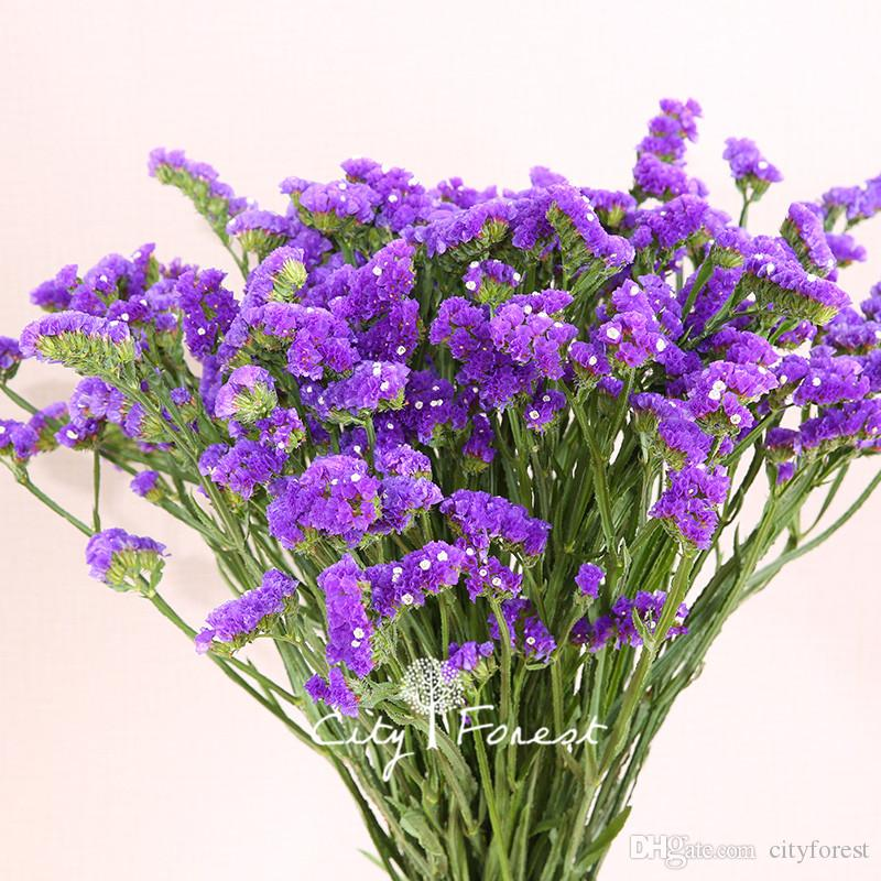 Statice blue purple color limonium sinuatum flower 100 seeds bag statice blue purple color limonium sinuatum flower 100 seeds bag easy to grow annual cutflower can used for dry flower statice seeds limonium sinuatum mightylinksfo