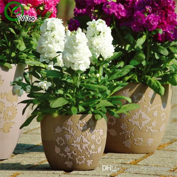 MIX Violet Graines Bonsaï Fleur Graines Très Parfumé 50 Particules / L097
