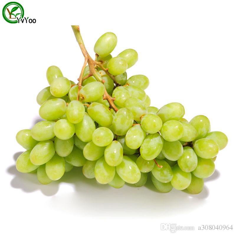 Graines de raisin vert Graines d'arbre de fruits biologiques Plante fruitière de jardin maison, peut être mangé! 30 pièces G016