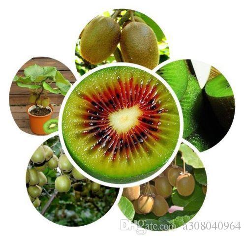분재 공장 키위 나무 씨앗 과일 정원 장식 공장 A93