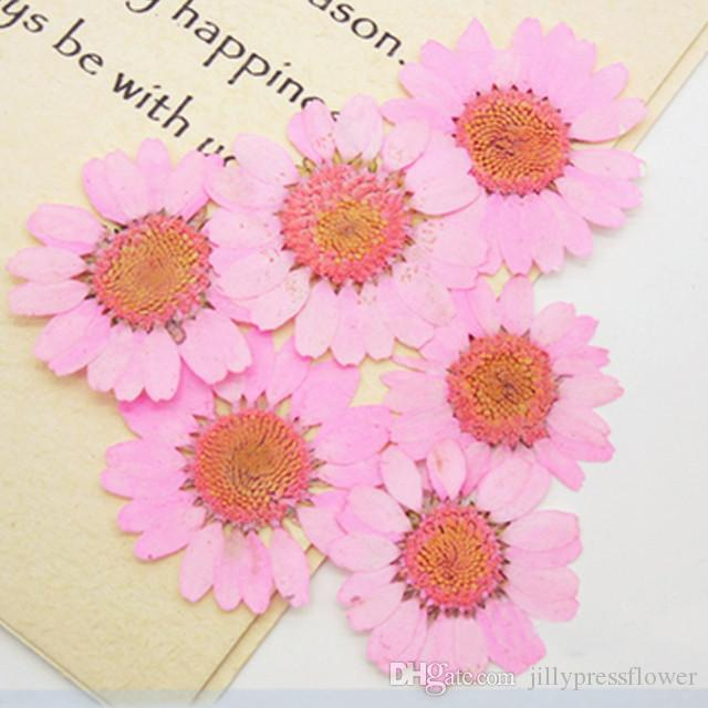 Factory Supply 16 Different Colors Medium Size Chrysanthemum 2.5-3CM Natural Real Pressed Flowers For Card Decoration Drop Shipment