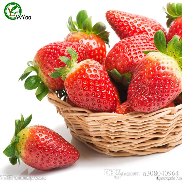 graines de fraises de jardin plantes de jardin bonsaï fruits biologiques et graines de légumes E018